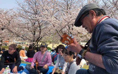 【イベント】ウクレレお花見会♪2019.04.06